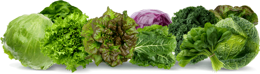 List of the best keto vegetables to eat on low carb diet