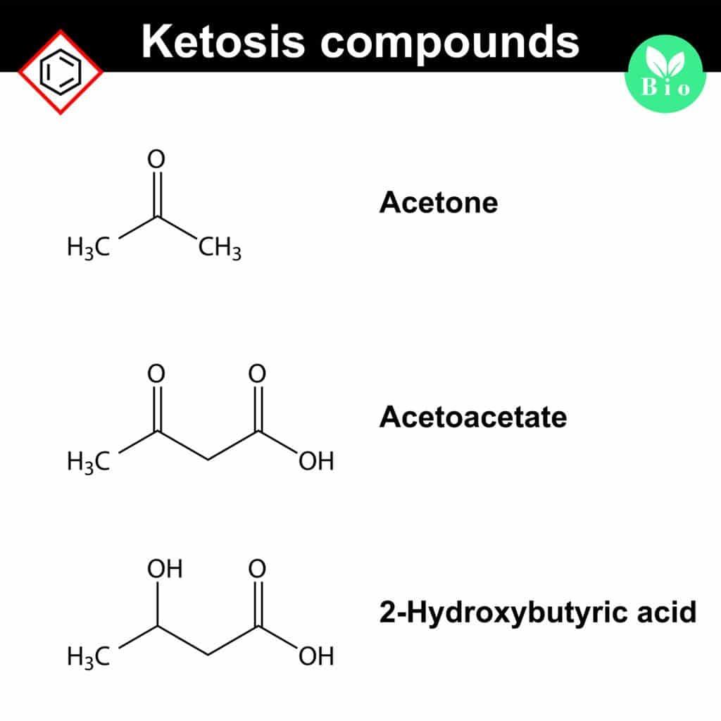 Ketone bodies -